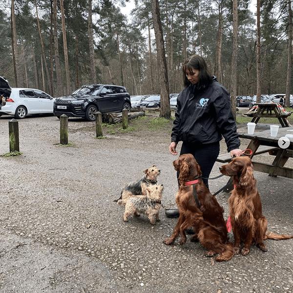 dog walker Knaphill Horsell